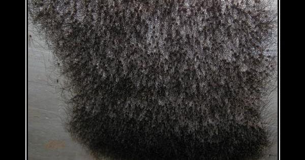 spiders Pubic hair