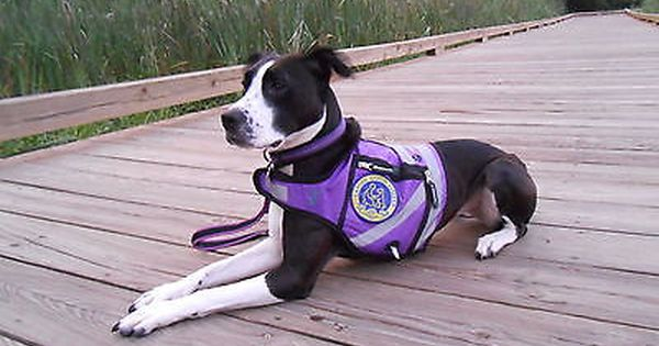 Purple CORDURA REFLECTIVE dog SAFETY Vest, SERVICE ...