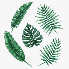 Watercolor Tropical Palm Leaves Vector Illustration Vine