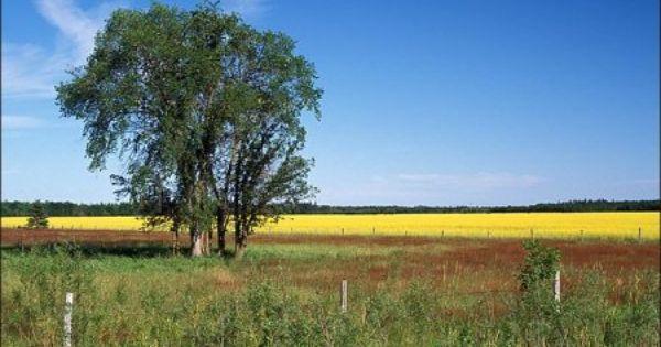 Teulon Manitoba Canada Country Roads Manitoba Canada Prairie