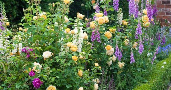 Des mixed borders l 39 anglaise dans mon jardin il for Jardin anglais mixed border