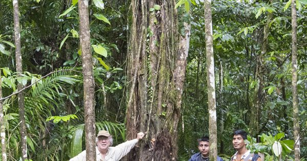 Honduran Rosewood Tree This Tree Is Dying It Has Been