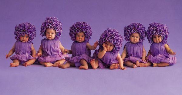 Dark Purple Fall Flowers | flower wallpapers beautiful ...