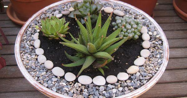 Zen garden with succulents gardening pinterest for Zen garden trees