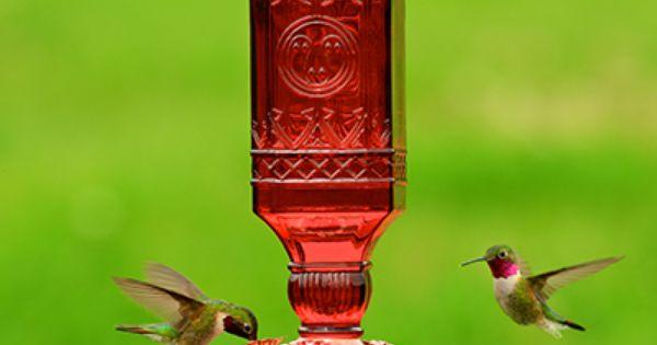 Bird Lovers Valentine S Day Gifts The Wild Bird Journal Glass Hummingbird Feeders Humming Bird Feeders Antique Bottle
