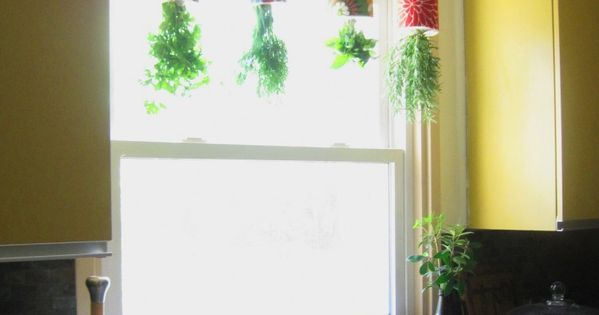 Here's a fun idea for a kitchen herb garden. You've seen the