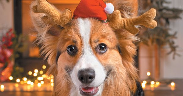 The Holidays Are Almost Here And What Better Way To Celebrate Than By Giving Back To Dogs In Need Via Dog Char Dog Charities Dog Pictures Funny Animal Pictures