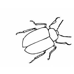 Thick Beetle Printable Coloring Page Free To Download And Print