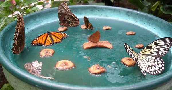 Gardening Ideas / Homemade Butterfly Feeder