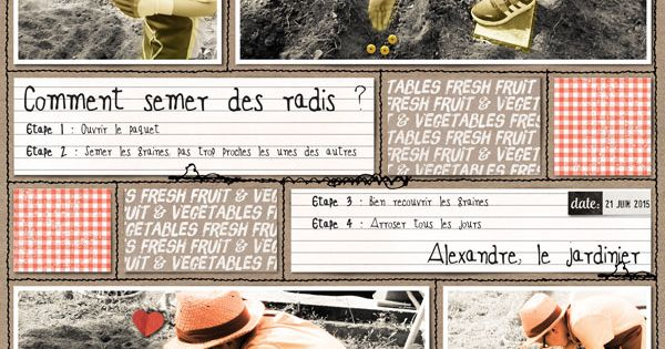 Comment semer des radis credits by pink reptile designs in the garden https the lilypad - Comment semer des radis ...