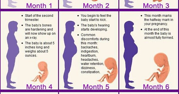 Month by month pregnancy stages | Baby G