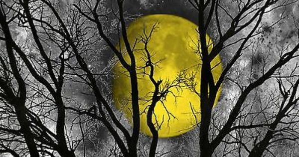 black white yellow moon tree wall art home decor matted picture