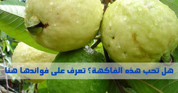 هل تحب الجوافة ذات الرائحة الذكية تعرف على فوائدها Guava Health Benefits Health Benefits Health