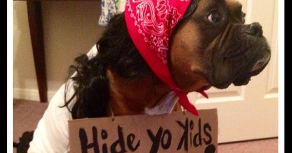 diy halloween costumes for your dog