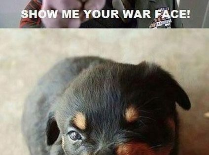 show me your war face, funny pictures - Dump A Day