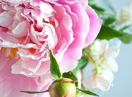 }{ pretty pink peony