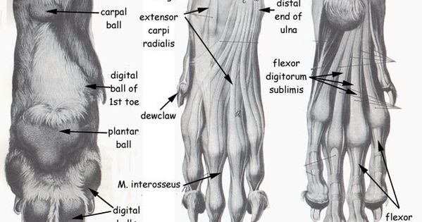 4234d33a69ea47629195996f8579690b Jpg 690 500 Katze Anatomie Anatomie Anatomieverweis