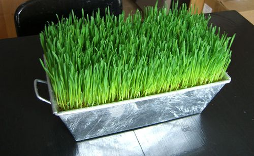 Fun, cute easter grass table decor idea