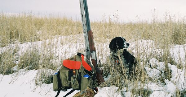 Katie and Yuma Colorado pheasant in the snow. The best pheasant dog I ...
