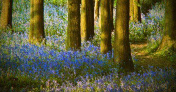 Bluebell Wood By Violinconcertono3 On Flickr Landscape Photography Landscape Bluebells