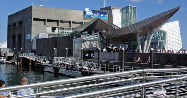 New england aquarium in boston massachusetts city guide New england aquarium tickets