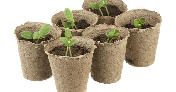 Consejos para hacer macetas biodegradables macetas - Colgadores de macetas ...