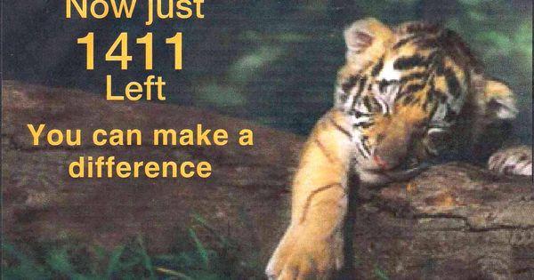 save tigers | SAVE TIGER | Vishwa Samvada Kendra | help the ...