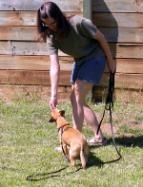 Training Your Dog Not To Pull On The Leash Dogs Dog Training