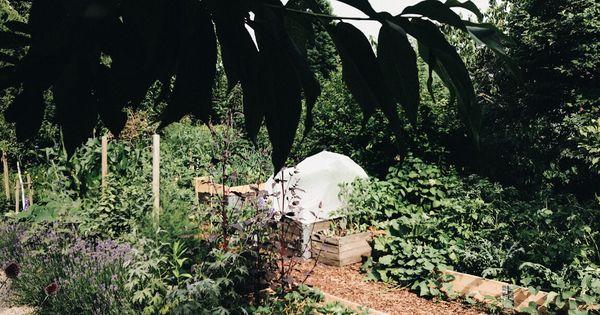 Wer Giesst Im Garten Wenn Ich Nicht Da Bin Gartenblog Hauptstadtgarten Garten Gartenblog Pflanzen
