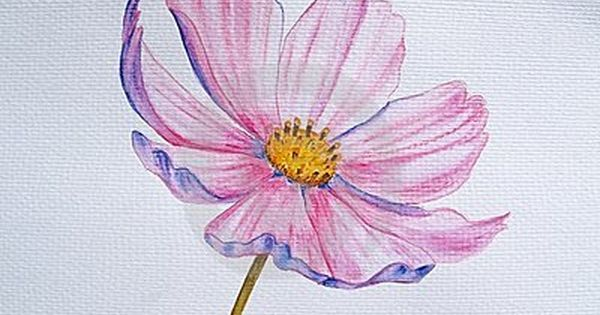 Watercolor Pencil Flowers Google Search Flower Drawing