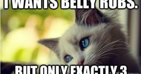 Really Funny Cats with Captions | Funny Animal Pictures With Captions -
