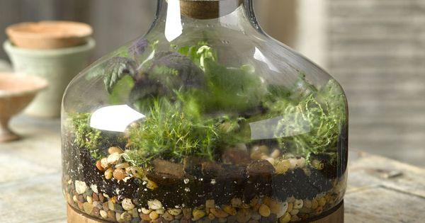 Glass Amp Wood Terrarium Large Gardener S Supply