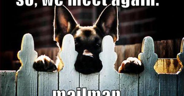 So We Meet Again Mailman German Shepherd Dogs Shepherd Puppies Dogs