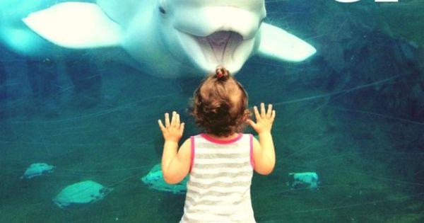 Spending The Day At Mystic Aquarium In Mystic Connecticut