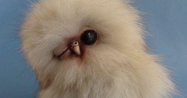 OOAK Fox Fur Owlet Baby Snowy Owl ~ by bear artist Melisa ...