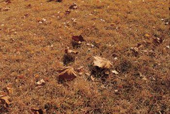 How To Grow Grass In Sand Or Gravel Conditions Growing Grass Best Grass Seed Sandy Soil