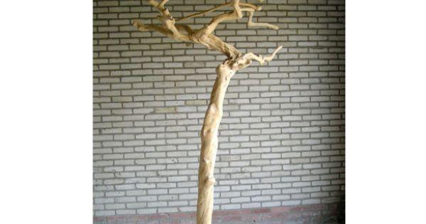 java tree koffieboom natural products pinterest trees and java. Black Bedroom Furniture Sets. Home Design Ideas