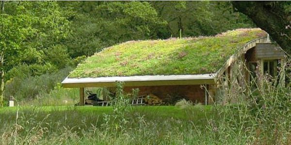 Dachbegrunung Gartenhaus Exterior In Grun Dachgarten Gartenhaus Grune Architektur