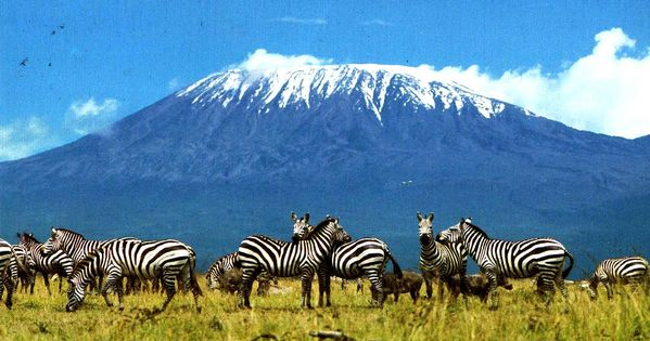 pics of mount kilimanjaro | Mount Kilimanjaro Zebra ...