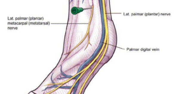 Manual lymphatic drainage 29 - 2 4