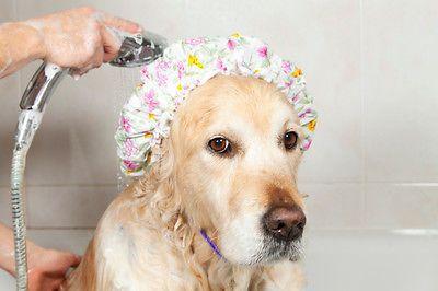 Pin By Nana On Mr Rex S Doggie Salon Spa Pampered Pooch Dogs