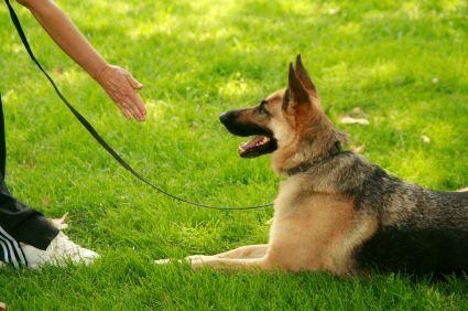 Dog Training Hand Signals Training Via Silent Dog Commands Dog