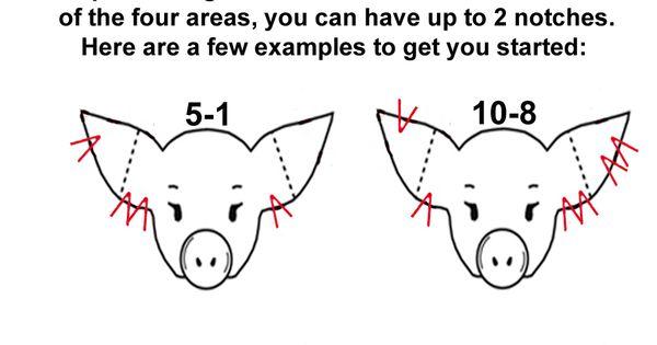 pig ear notching