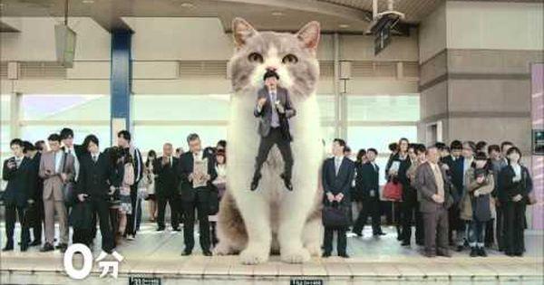 Lotte Fits Link Cm 開心上班去 篇 15s 化け猫 にゃんこ ペット