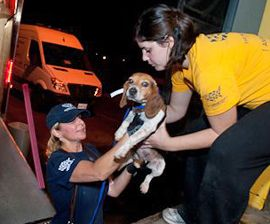 Volunteer With The Animal Rescue Team The Humane Society Of The