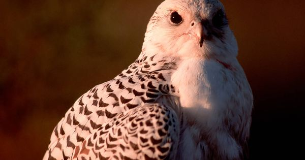 Pin By Rezakarimi On Birds Of Prey Animals Predator Prey