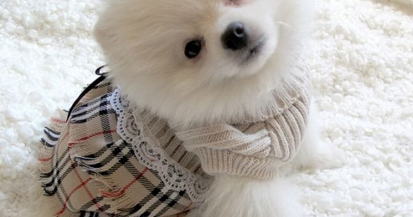 Yes, it's real Burberry. Duh. American Eskimo! :)