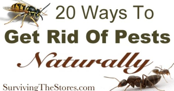 20 ways to get rid of pests without harsh chemicals ants Ways to get rid of mosquitoes in your house