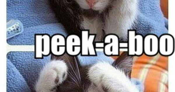 peek a boo funny cat pictures pinterest. Black Bedroom Furniture Sets. Home Design Ideas