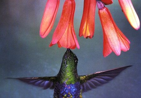 hummingbird....... my power animal